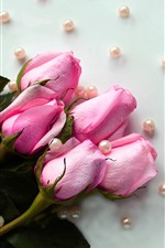 Pink roses, water droplets, beads
