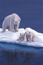 Preview iPhone wallpaper Polar bears, snow island, art picture