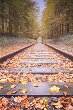 Railroad, yellow leaves, trees, autumn