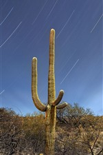 Preview iPhone wallpaper Saguaro, bushes, desert, meteor