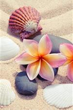 미리보기 iPhone 배경 화면 모래, 플루 메리아, 조개