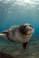 Sea animal, seals, underwater, sunshine