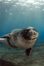 Animal mar, selos, subaquático, sol