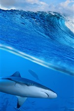 Sea waves, water splash, shark, underwater