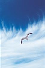Seagull flight, sky, white clouds