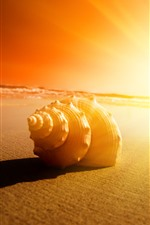 Seashell, sands, sunshine, glare