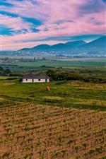 Slovakia, mountains, vineyard, fields, village