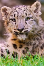 Preview iPhone wallpaper Snow leopard cub, grass, rest, look