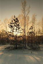 Snow, trees, sun rays, dusk, winter