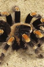 미리보기 iPhone 배경 화면 거미, 모래