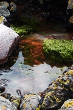 Stones, puddle, water