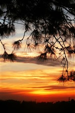 Preview iPhone wallpaper Sunset, twigs, silhouette