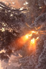 Thick snow, trees, winter, sun rays