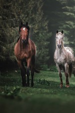 Three horses running, trees, fog