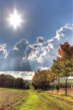 Trees, grass, clouds, sun, autumn