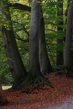 Trees, path, park