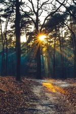 미리보기 iPhone 배경 화면 나무, 태양 광선, 아침, 가을