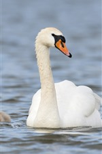 Preview iPhone wallpaper White swan family, lake