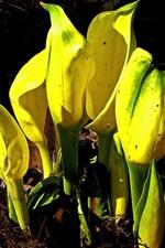 iPhone обои Желтые цветы, земля