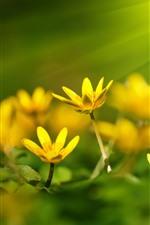 Yellow flowers, sunshine