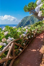 Azores, Sao-Miguel, flowers, footpath, sea