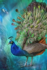 Beautiful bird, peacock, colorful feathers, creative picture