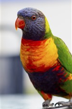 Preview iPhone wallpaper Beautiful parrot, colorful feathers, bird