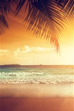 Beautiful sunset, palm tree leaves, beach, sea, tropical, summer