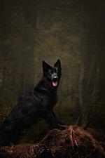 Black dog, forest, forest, darkness