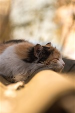 Preview iPhone wallpaper Cat sleeping, hazy background
