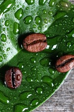 Coffee beans, green leaf, water droplets