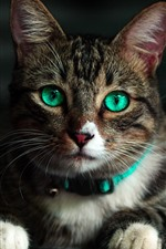 Cute cat look at you, face, green eyes