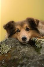 かわいい犬があなたを見て、石、苔