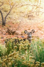 Preview iPhone wallpaper Deer, wildflowers, trees