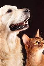 Dog and cat, friends, pets