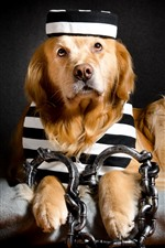 Preview iPhone wallpaper Funny dog, prisoner, chain