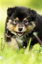 Furry puppy, green grass