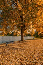 Golden autumn, trees, leaves, bench, park, lake