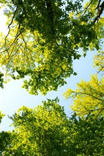 Preview iPhone wallpaper Green trees, summer, sunshine