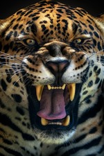 Preview iPhone wallpaper Jaguar roar, face, teeth