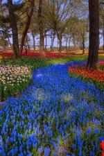 iPhone壁紙のプレビュー 日本、公園、木々、色とりどりのチューリップ、春