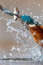 Preview iPhone wallpaper Kingfisher catching fish, water splash, moment