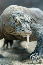 Preview iPhone wallpaper Komodo dragon, lizard