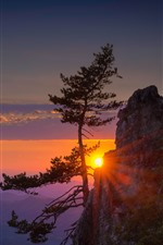 Preview iPhone wallpaper Mountain, cliff, tree, sun rays, sunrise, morning