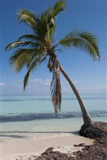 Preview iPhone wallpaper One palm tree, sea, beach