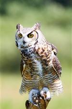 Preview iPhone wallpaper Owl, bird, standing, wood stick