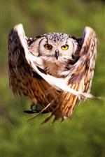 Owl flight, wings, moment