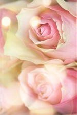 Preview iPhone wallpaper Pink roses, hazy, romantic