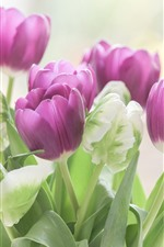 Preview iPhone wallpaper Purple and green tulips, flowers