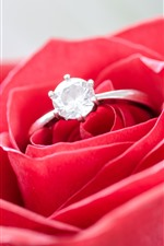 Red rose, diamond ring